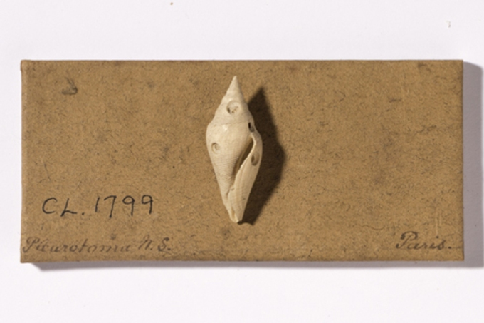 gastropod-boring